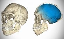 ซากดึกดำบรรพ์บรรพบุรุษมนุษย์ในโมร็อกโกเก่าแก่ที่สุด